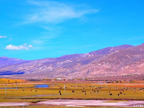 28-西藏拉薩風光 前往納木措途中(我是吳酸酸)