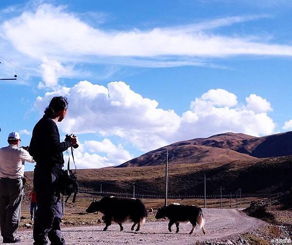 56-西藏拉薩風光 前往納木措途中(我是吳酸酸)