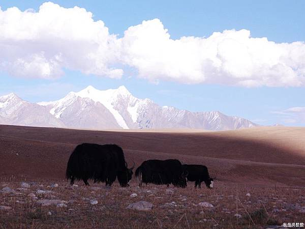 58-西藏拉薩風光 前往納木措途中(我是吳酸酸)