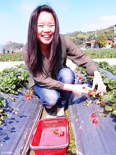 09-苗栗大湖採草莓.JPG