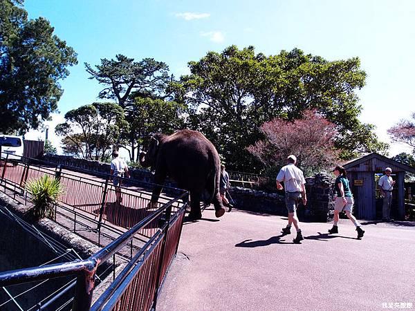 85-紐西蘭奧克蘭動物園