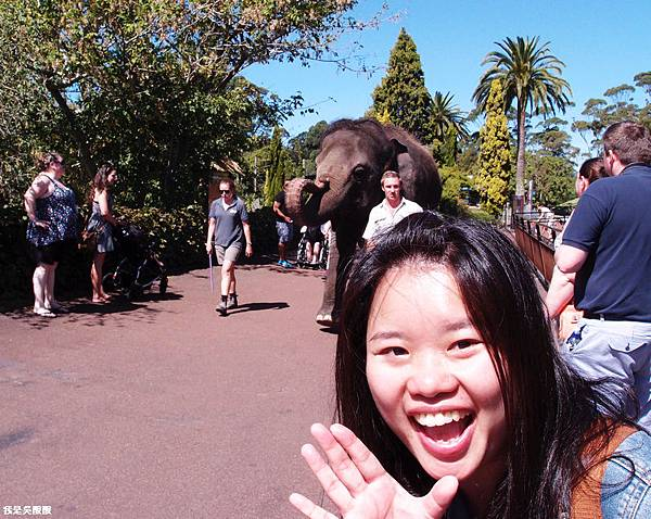 84-紐西蘭奧克蘭動物園