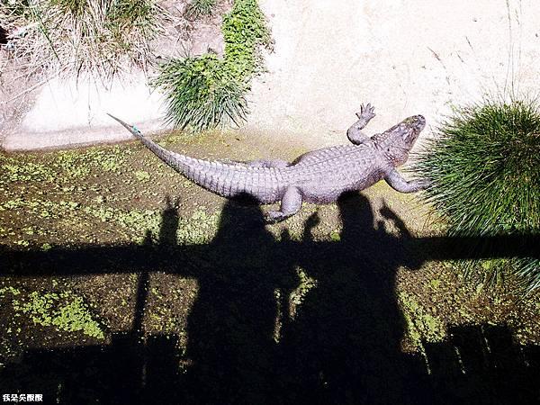 86-紐西蘭奧克蘭動物園