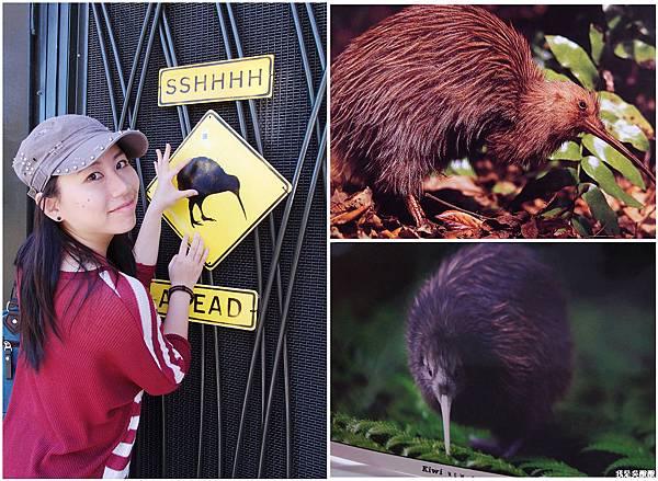 89-紐西蘭奧克蘭動物園