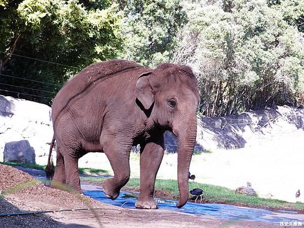 91-紐西蘭奧克蘭動物園