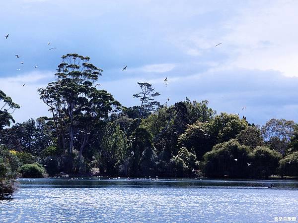 92-紐西蘭奧克蘭鴨子湖