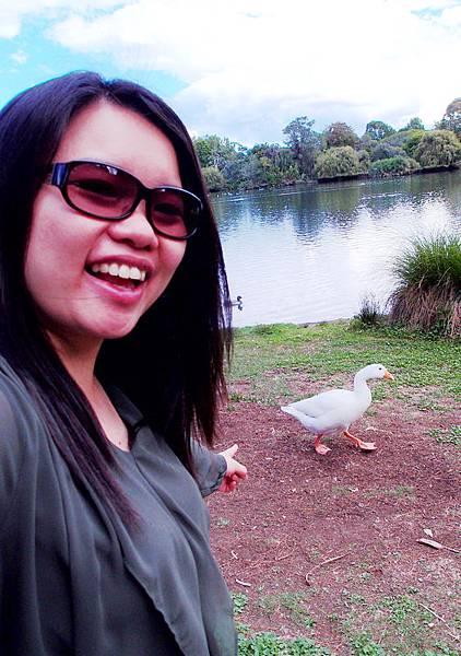 100-紐西蘭奧克蘭鴨子湖