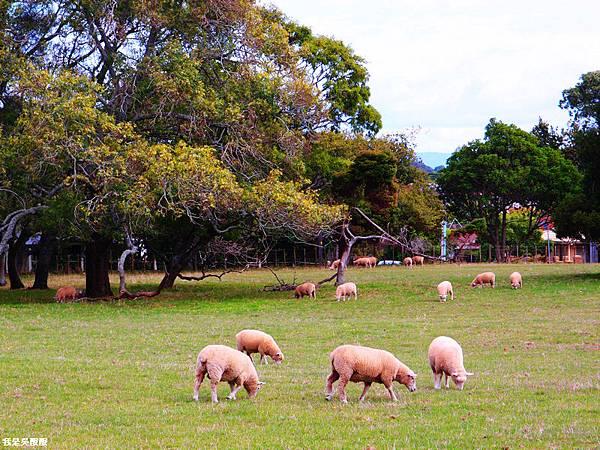 113-紐西蘭北島奧克蘭美麗公園