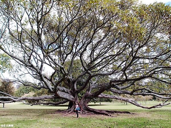 115-紐西蘭北島奧克蘭美麗公園