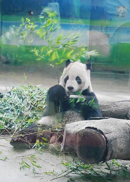28-酸酸媽媽台北3日遊(台北木柵動物園)