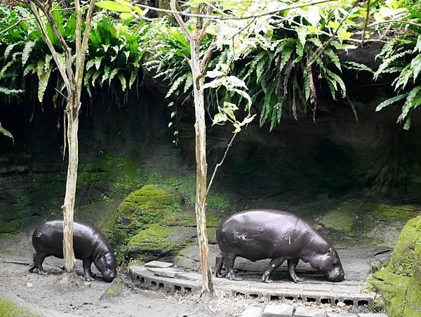 43-酸酸媽媽台北3日遊(台北木柵動物園)