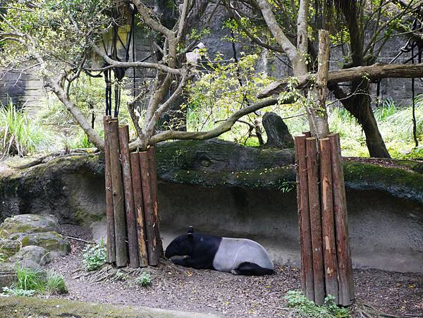 44-酸酸媽媽台北3日遊(台北木柵動物園)