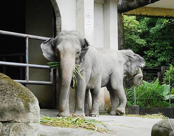 45-酸酸媽媽台北3日遊(台北木柵動物園)