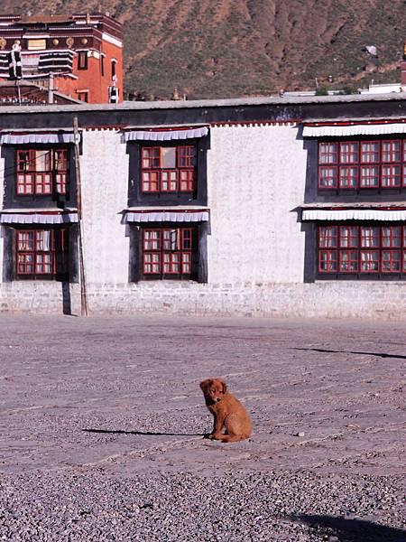 10-西藏扎什倫布寺