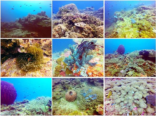 90-ARTISTIC DIVING RESORT Sipalay City, Philippines