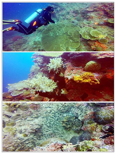92-ARTISTIC DIVING RESORT Sipalay City, Philippines