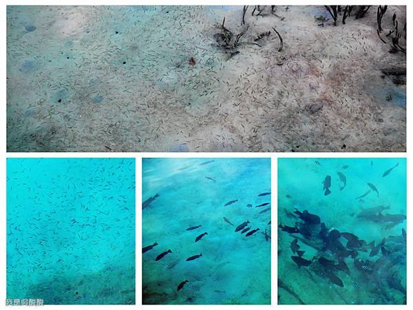 045-Coral Bay Beach And Dive Resort珊瑚灣海灘潛水勝地酒店.jpg