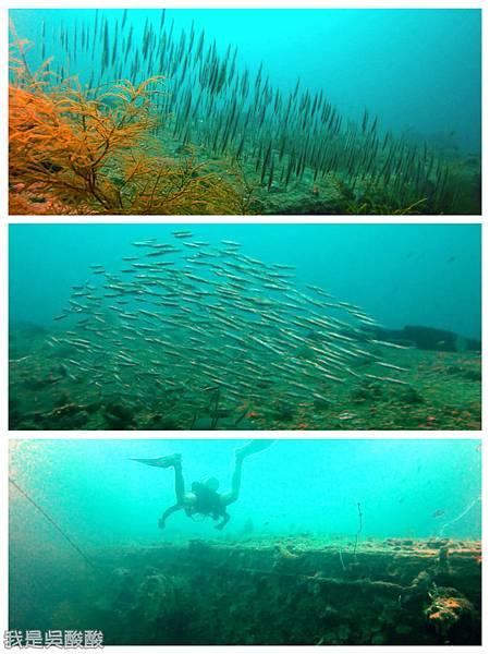 056-Coral Bay Beach And Dive Resort珊瑚灣海灘飯店 潛水.jpg