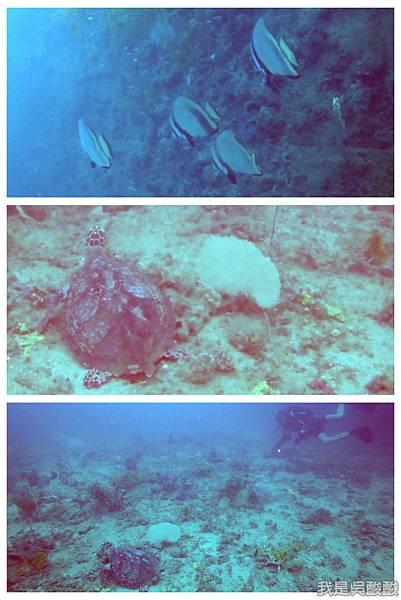 059-Coral Bay Beach And Dive Resort珊瑚灣海灘飯店 潛水.jpg