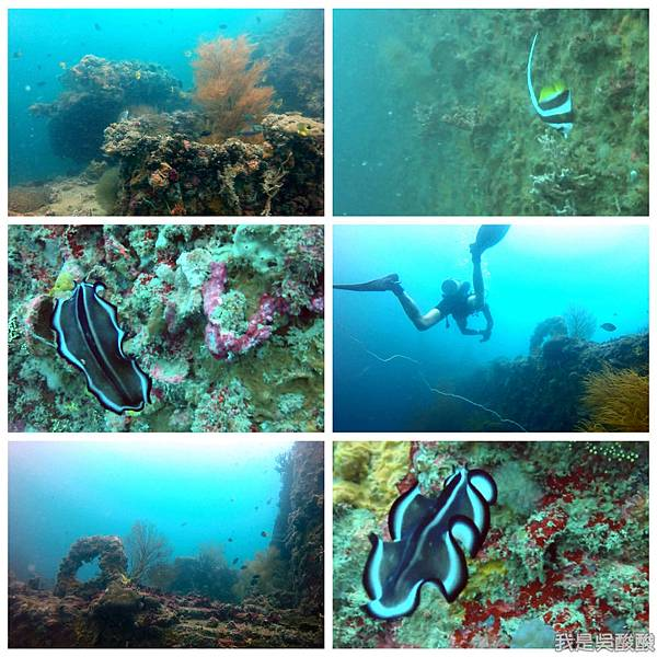 060-Coral Bay Beach And Dive Resort珊瑚灣海灘飯店 潛水.jpg
