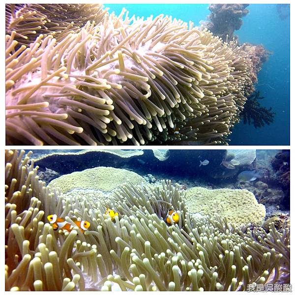 074-Coral Bay Beach And Dive Resort珊瑚灣海灘飯店 潛水.jpg