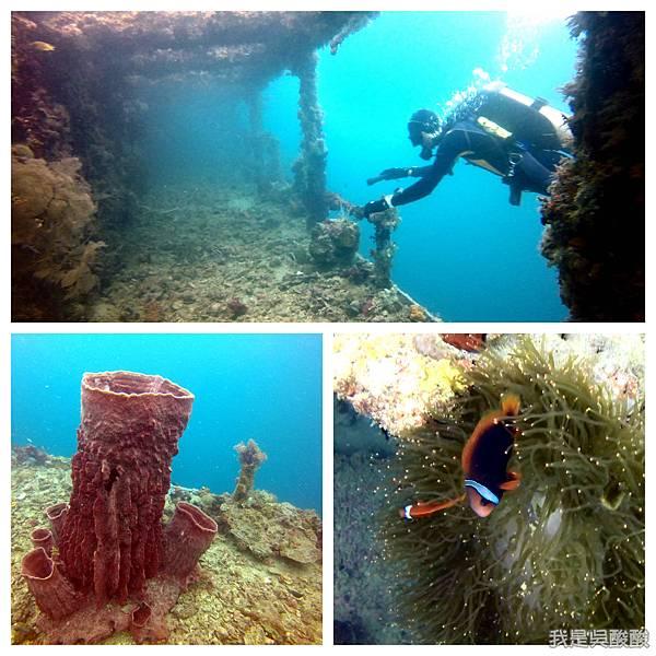 075-Coral Bay Beach And Dive Resort珊瑚灣海灘飯店 潛水.jpg