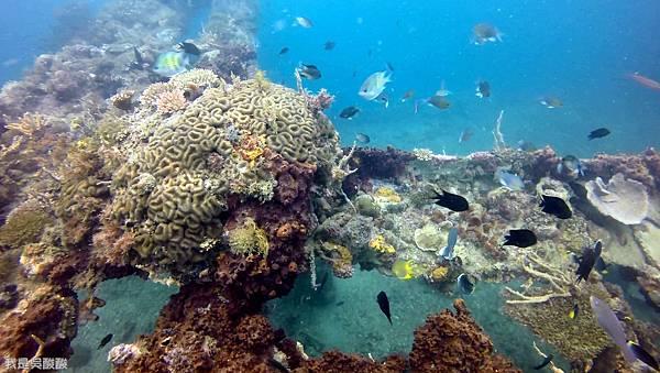 076-Coral Bay Beach And Dive Resort珊瑚灣海灘飯店 潛水.jpg
