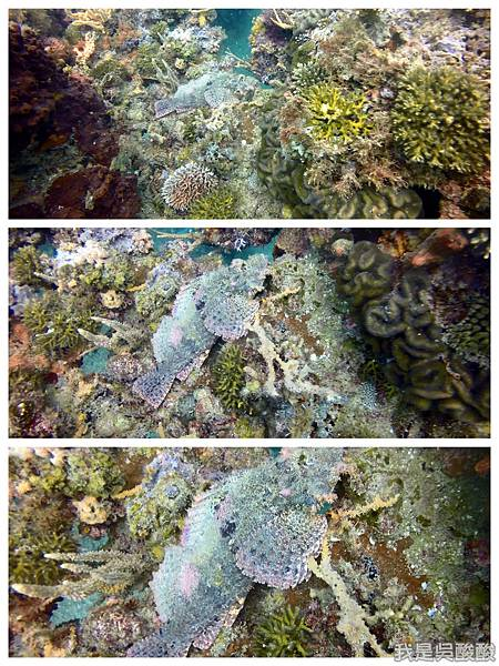 077-Coral Bay Beach And Dive Resort珊瑚灣海灘飯店 潛水.jpg