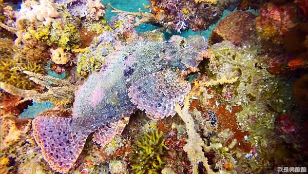 078-Coral Bay Beach And Dive Resort珊瑚灣海灘飯店 潛水.jpg
