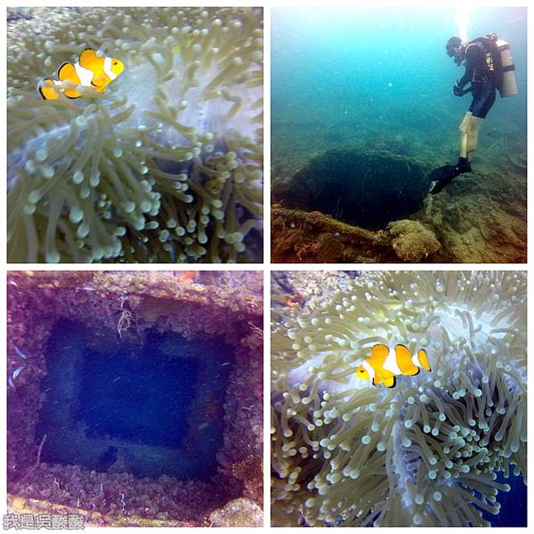 079-Coral Bay Beach And Dive Resort珊瑚灣海灘飯店 潛水.jpg