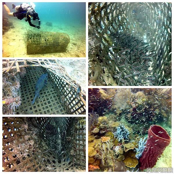 081-Coral Bay Beach And Dive Resort珊瑚灣海灘飯店 潛水.jpg