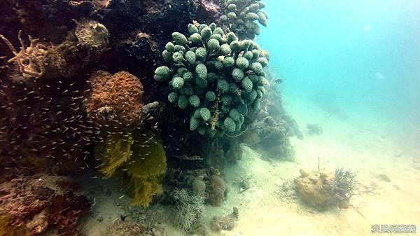 083-Coral Bay Beach And Dive Resort珊瑚灣海灘飯店 潛水.jpg
