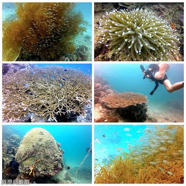 086-Coral Bay Beach And Dive Resort珊瑚灣海灘飯店 潛水.jpg