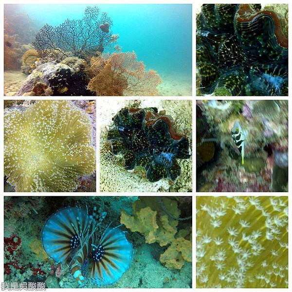 087-Coral Bay Beach And Dive Resort珊瑚灣海灘飯店 潛水.jpg