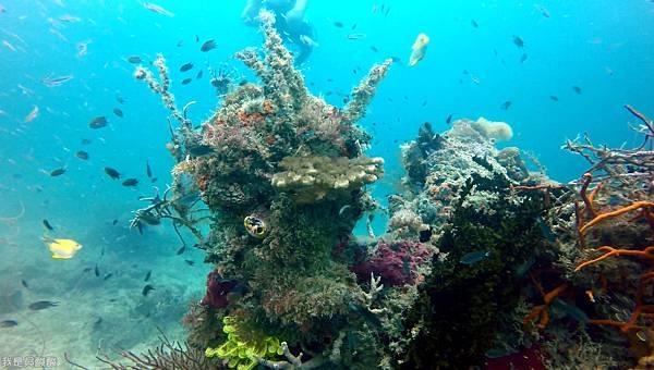088-Coral Bay Beach And Dive Resort珊瑚灣海灘飯店 潛水.jpg