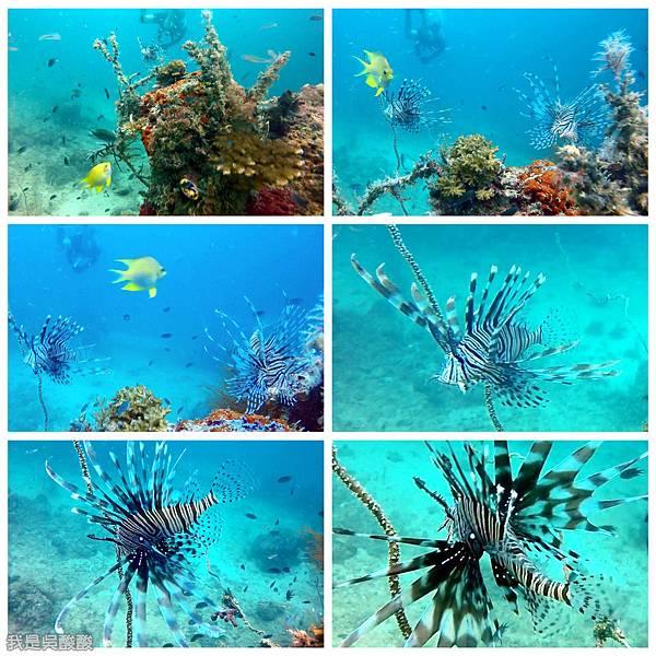 089-Coral Bay Beach And Dive Resort珊瑚灣海灘飯店 潛水.jpg