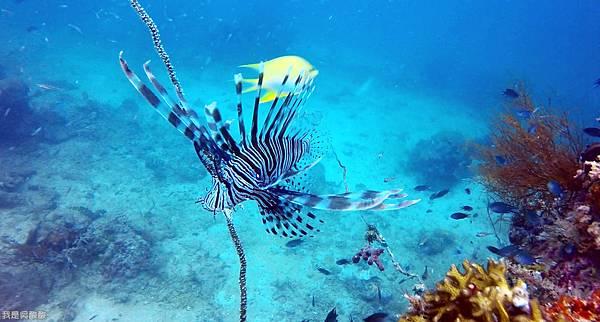 090-Coral Bay Beach And Dive Resort珊瑚灣海灘飯店 潛水.jpg