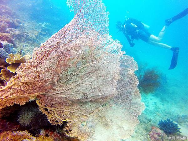 092-Coral Bay Beach And Dive Resort珊瑚灣海灘飯店 潛水.JPG
