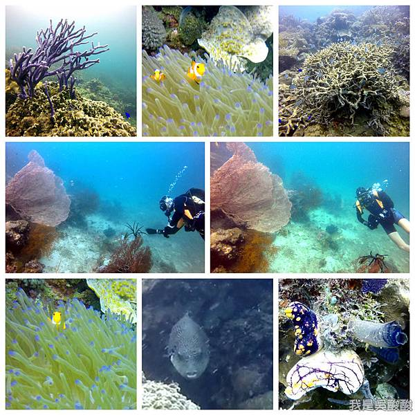093-Coral Bay Beach And Dive Resort珊瑚灣海灘飯店 潛水.jpg