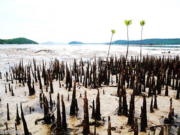 004-Coron Coral Bay Beach And Dive Resort.JPG