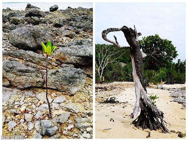 010-Coron Coral Bay Beach And Dive Resort.jpg