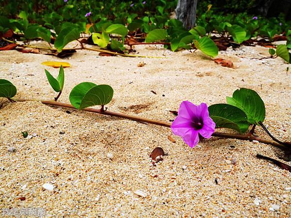 014-Coron Coral Bay Beach And Dive Resort.JPG