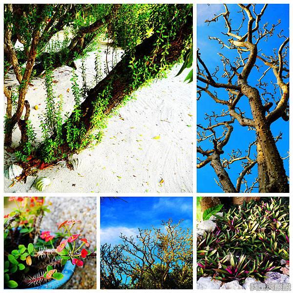 055-Coron Coral Bay Beach And Dive Resort.jpg