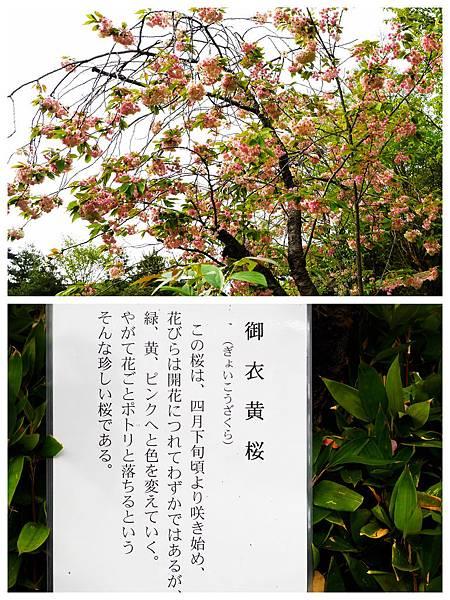 192-酸酸東京+京都 7日自助旅行.jpg