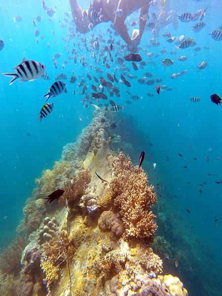 07-Lusong Gunboat Shipwreck沈船CORON-Tour G.JPG