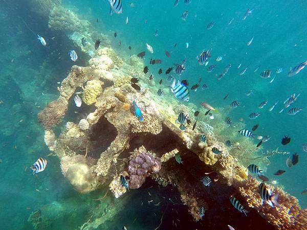10-Lusong Gunboat Shipwreck沈船CORON-Tour G.JPG