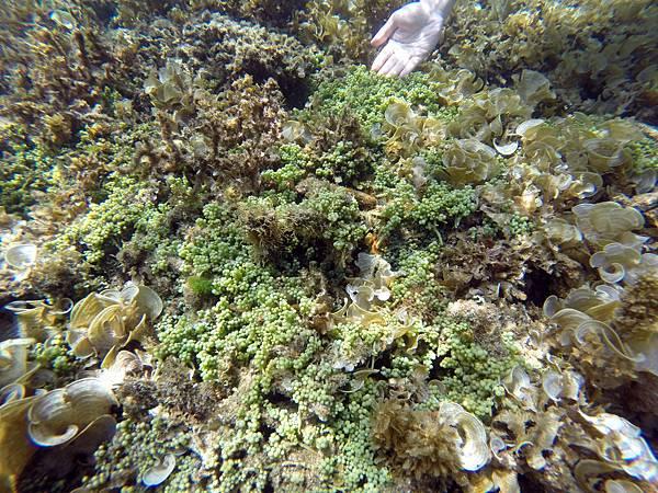 34-Calumbuyan Island, 午餐,CORON-Tour G 海葡萄.JPG