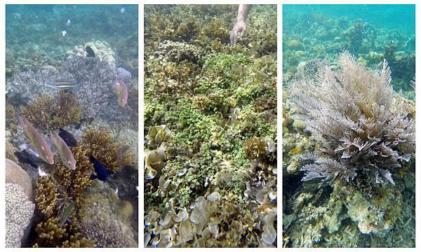 35-Calumbuyan Island, 午餐,CORON-Tour G 海葡萄.jpg