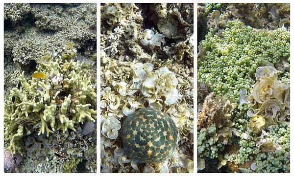 36-Calumbuyan Island, 午餐,CORON-Tour G 海葡萄.jpg