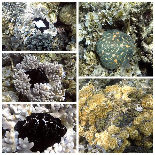 38-Calumbuyan Island, 午餐,CORON-Tour G 玉兔螺 饅頭海星.jpg